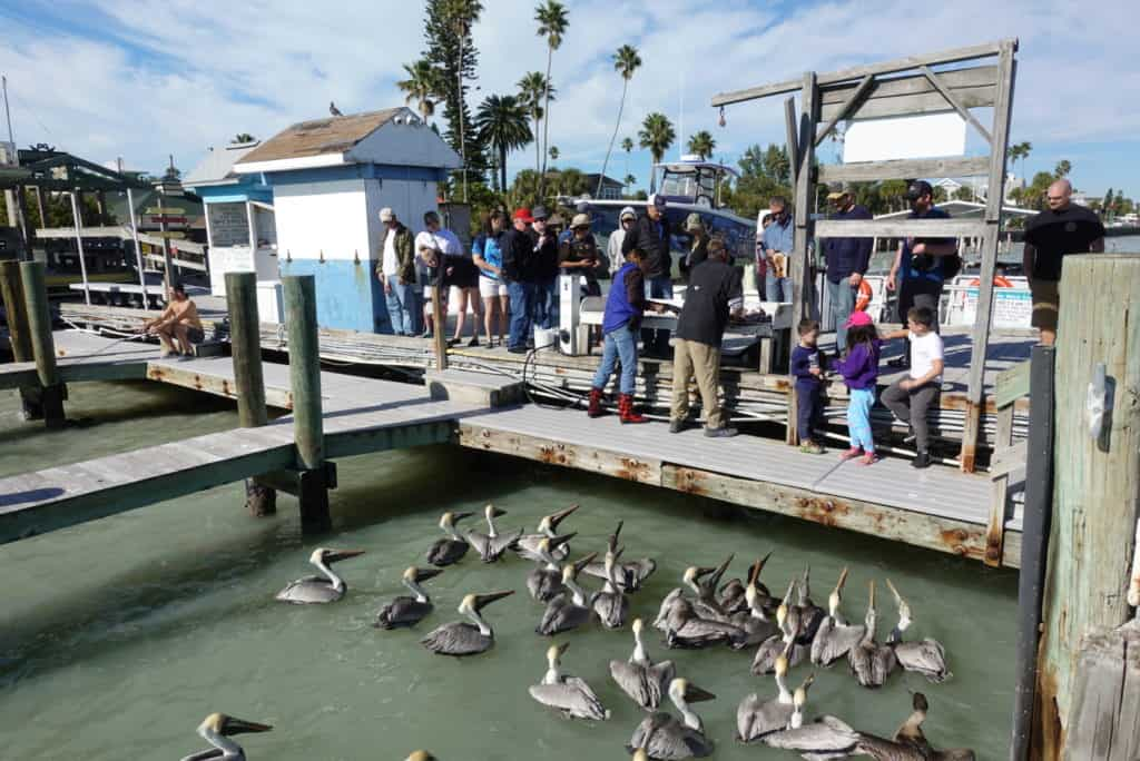cleaning fish at St. Pete beach