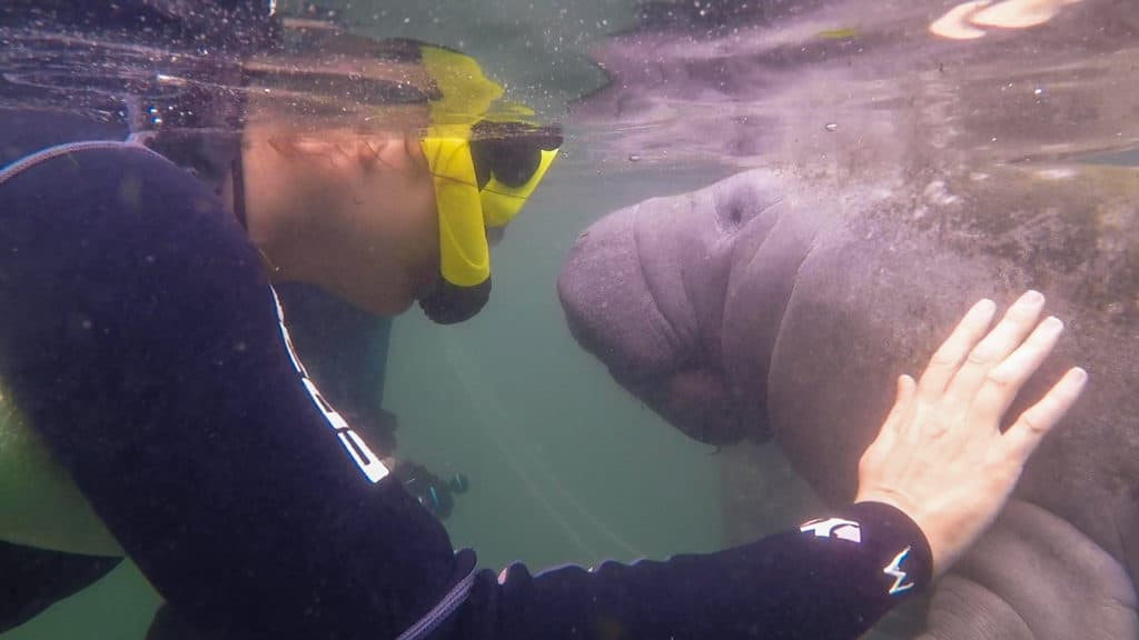 Cindy Swimming with Manatees Crystal River FL