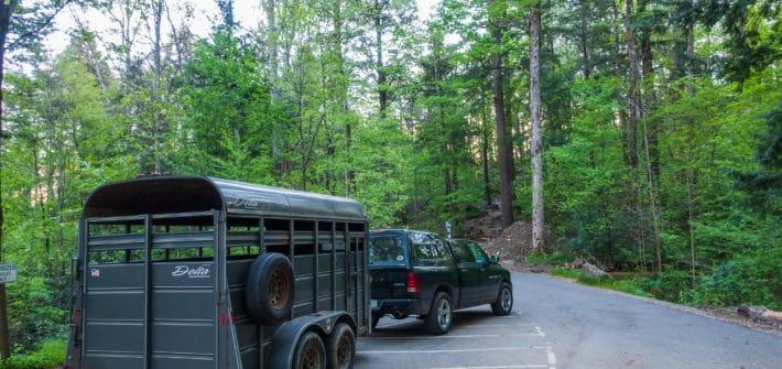 Smoky Mountain Llama Train