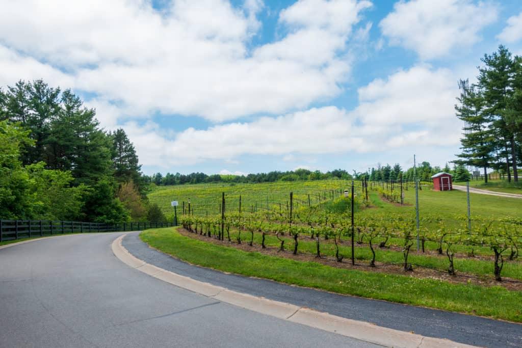 Black Star Farms Winery Driveway