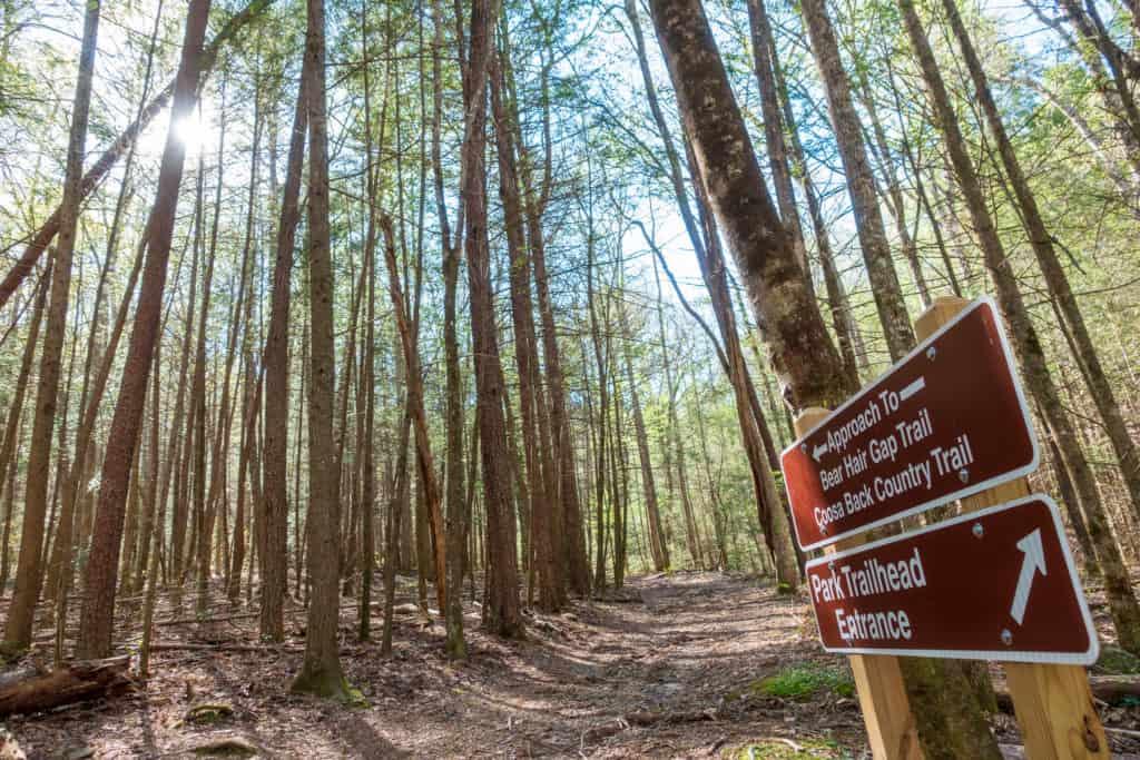 Vogel State Park Trails
