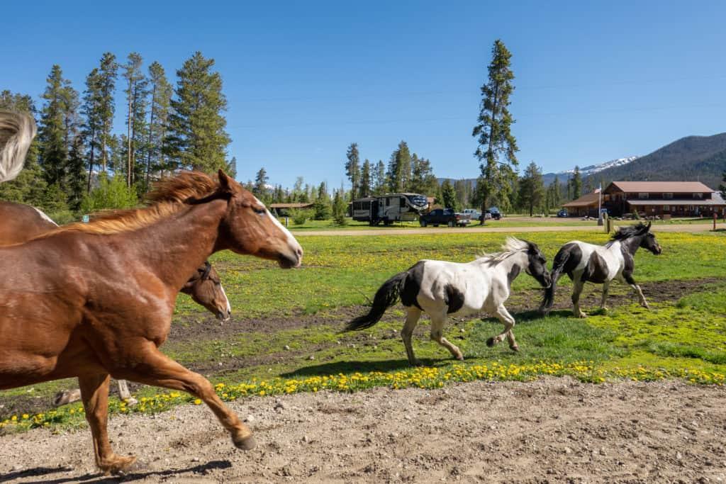 Horses at Winding River